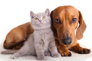 Derfor er en hund ofte en større opgave end en kat