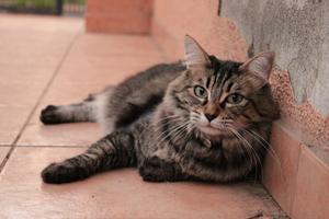 Transportbur til katten sikrer den bedre ved bilkørsel