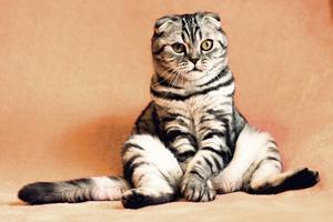 Glem ikke din partner til fordel for katten
