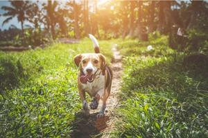 De 5 ting du skal gøre, hvis din hund skal være sund, ...