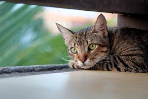 Beskyt din kat mod flåter og lopper hele året rundt