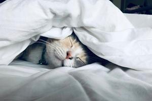 Sådan hjælper du din kat, hvis den er urolig