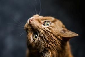 Sådan bliver du en god katteejer