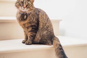 Sådan ved du med sikkerhed, hvornår din kat er rask