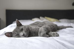 Kom godt i mål med at få din nye killing hjem