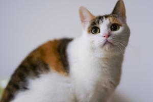 Så finansierar du din katts plötsliga veterinärbesök