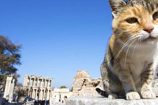 massage frederikshavn guloggratis katte