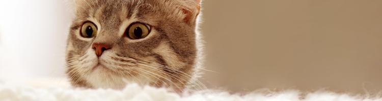 Ventetid ved dyrlægen? Fordriv tiden med disse 5 tips