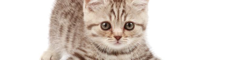 Undgå at skade din kat med passiv rygning – invester i...