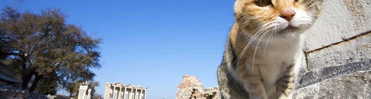 Storbyferie i Rom - men hvad med katten?