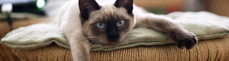 Sådan plejer du din kats pels