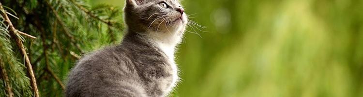 Til dyrlæge med katten? Sådan får du ventetiden til at...