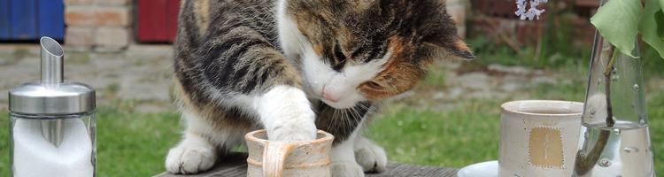 Lav dine egne godbidder til din kat!