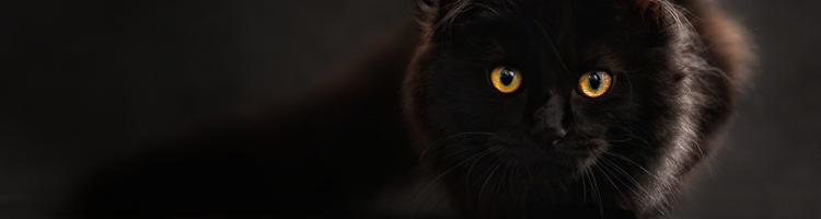 Tre ting, når du har købt kat, til dit hjem