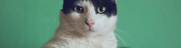 Fem ting du skal huske, når du bliver katteejer