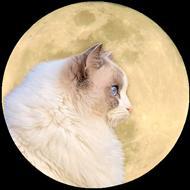 Luna S
