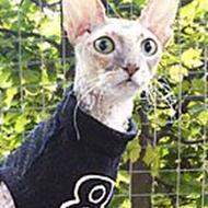 pivnu (glemmer du, så husker jeg det kat for kat)