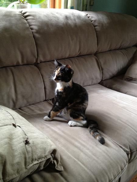 kat kaster op hver dag