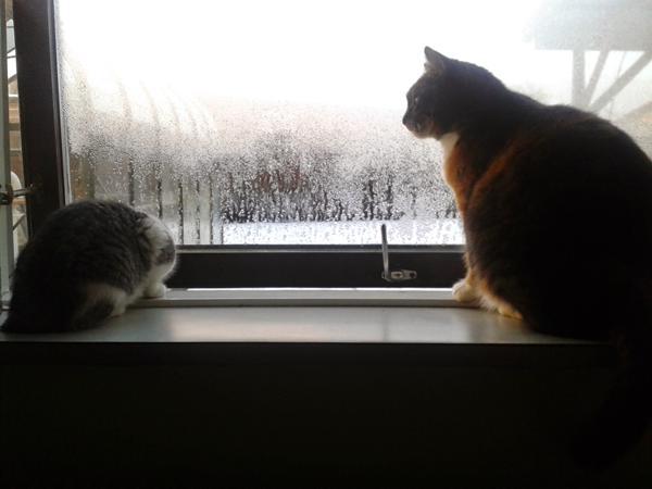 kattesnak mellem katte?
