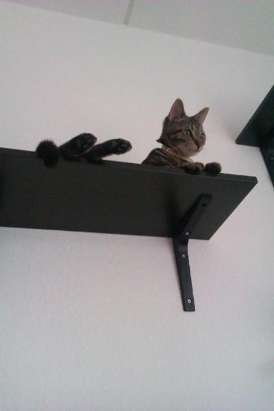 Hylder på væggen :)