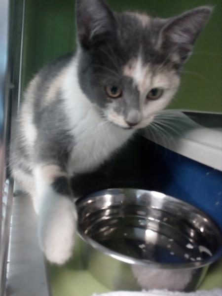 Hjælp til at finde navn til sød hun killing