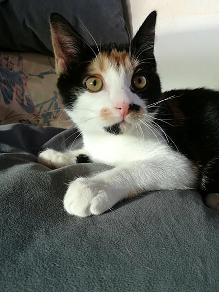 Nova - vores nye kat