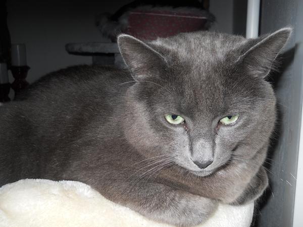 kat elsker metacam