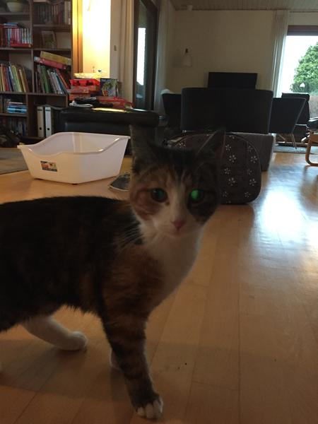 Internat kat stjæler mad
