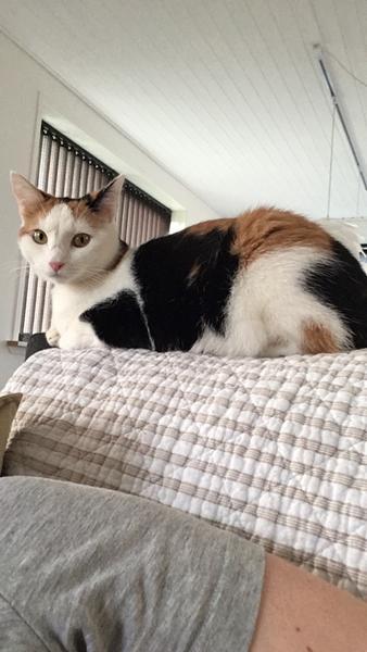 """Kat der ikke kan """"undvære"""" en :-D"""
