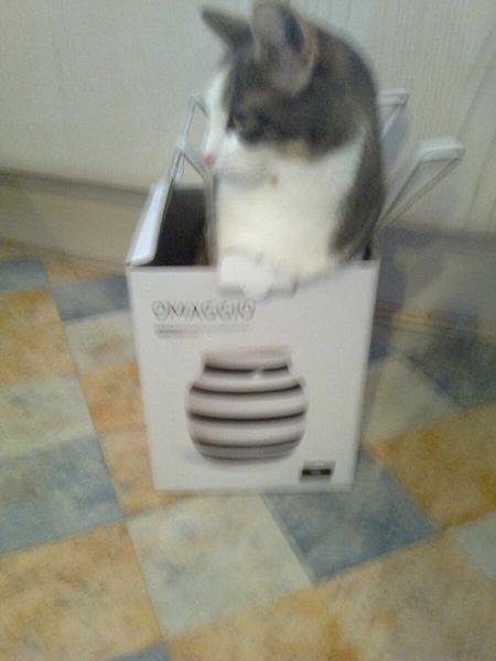 Kähler kat