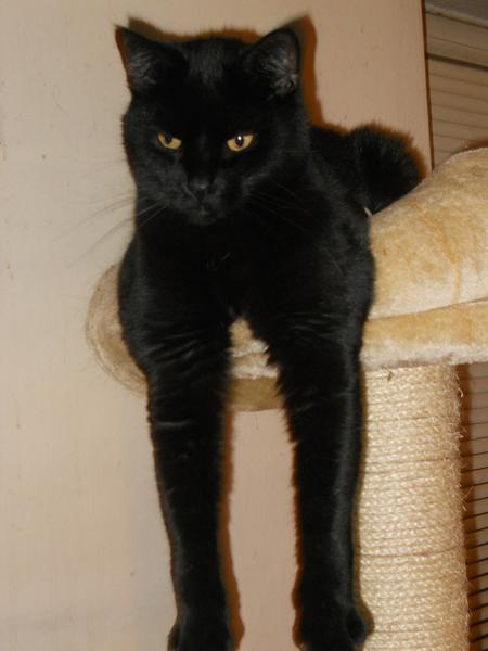 vis os din sort kat