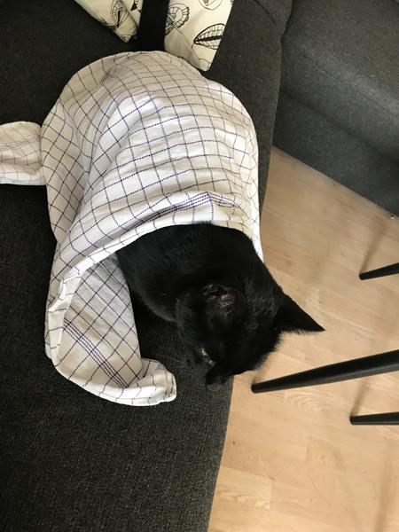 Nedkøling af katten