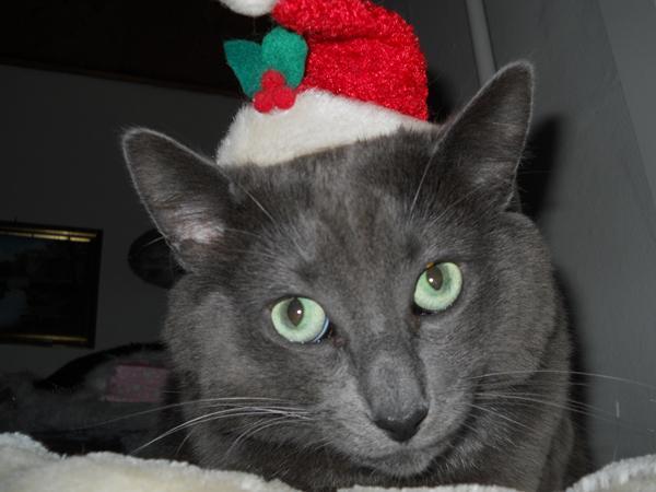 katte, december og jul