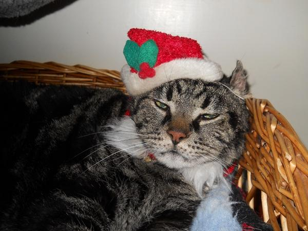 God jul til jer alle og jeres misser