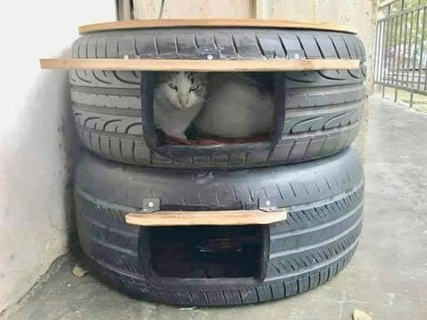 Tips til udendørs katte.
