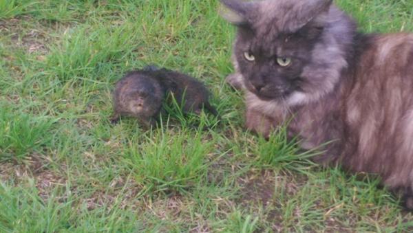 Katte skider på græsset og fanger fugle !