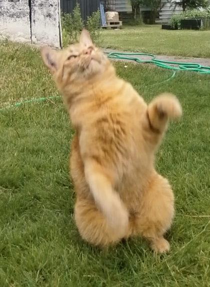 Katte sange - Billeder