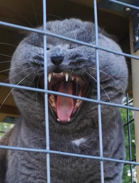KONKURRENCE: Farligt vildt dyr :O
