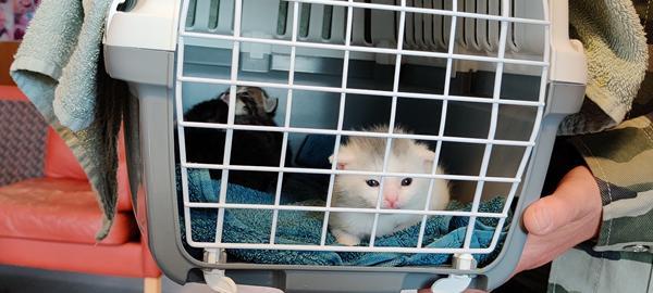 tre dejlige killinger fra Kattens Værn