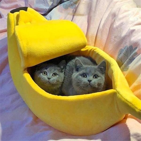 Se disse søde katte bananskræls huse