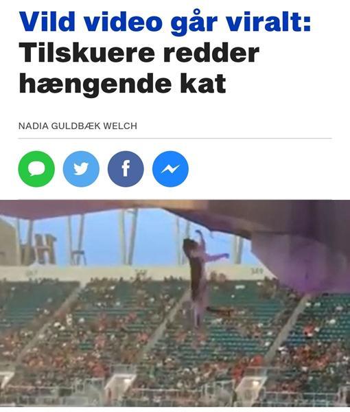 Kat blev reddet af tilskuerer på Miami Stadium