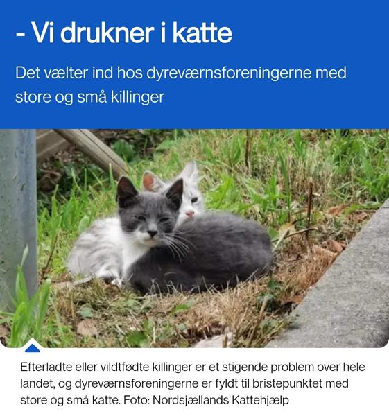 Katte savner nye hjem...