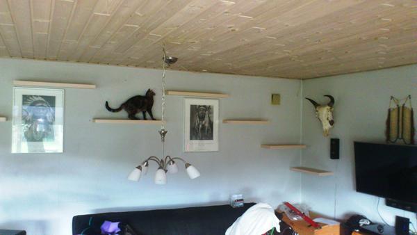 Vil disse hylder kunne bære kattene?? - Skrevet af Liv B