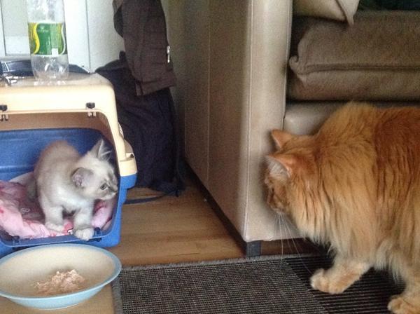 hvornår er en kat gammel