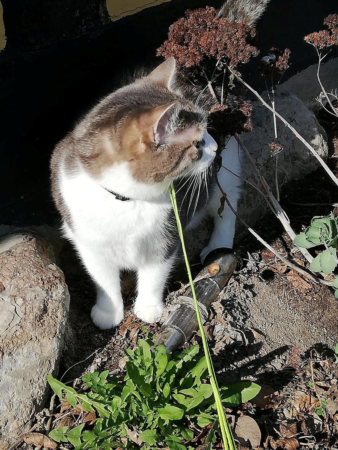 Huskat Cleo billede 2
