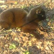 Huskat plet (NKH's kat)