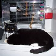 Huskat Figaro