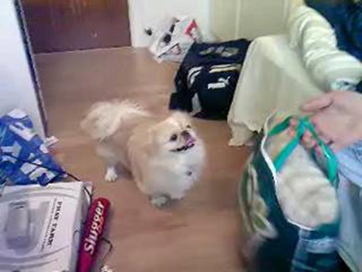 mand knepper hund
