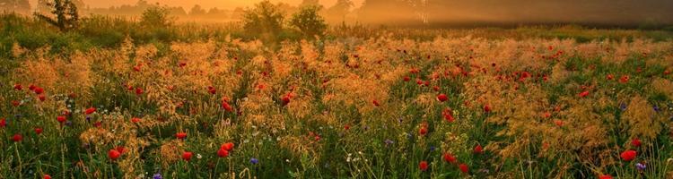 Fordele ved et liv på landet