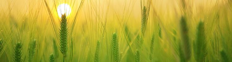 Populære landbrugsspil til de elektroniske enheder